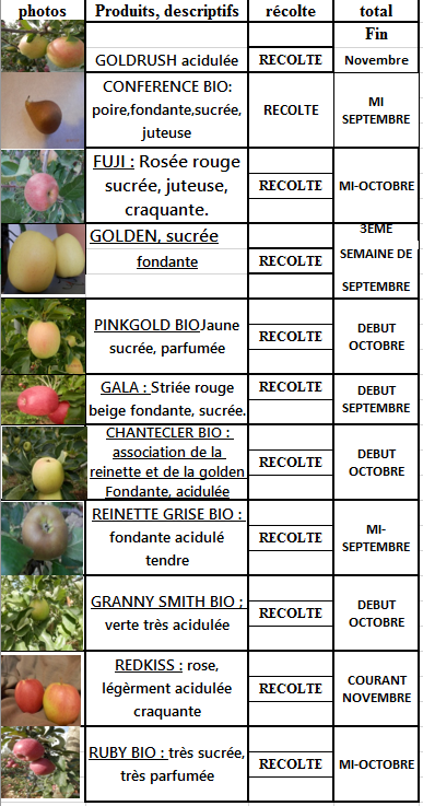 calendrier-pomme